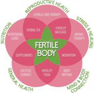 fertile body model